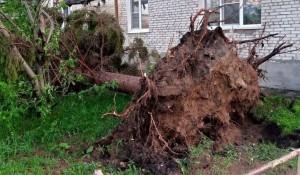 Ветер вырвал деревья в Тальменке.