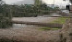 Ураган повалил деревья на Алтае.