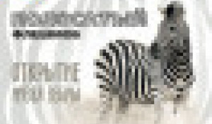 Зебра в зоопарке.
