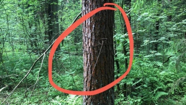 Растяжка в лесу.