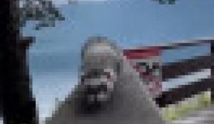 Хорек Буся путешествует по Алтаю
