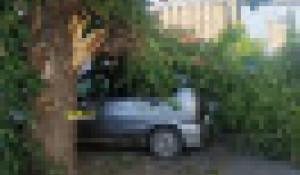 Огромная ветка рухнула на автомобиль в центре Барнаула.