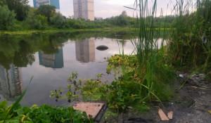 Безымянное озеро в Барнауле.