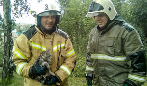 Пожарные Горного Алтая спасли котика и жеребенка.