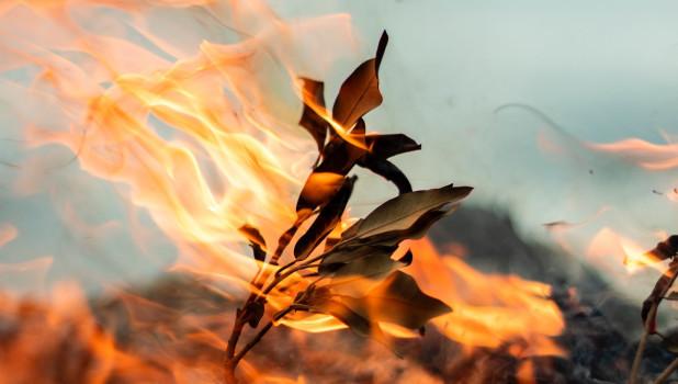 """""""Диверсия иностранных спецслужб"""": барнаульский единоросс поразмышлял о причинах лесных пожаров"""