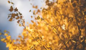 Осень. Теплая погода. Листья.
