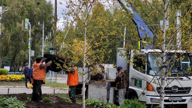 В Барнауле приступили к высадке новых деревьев.