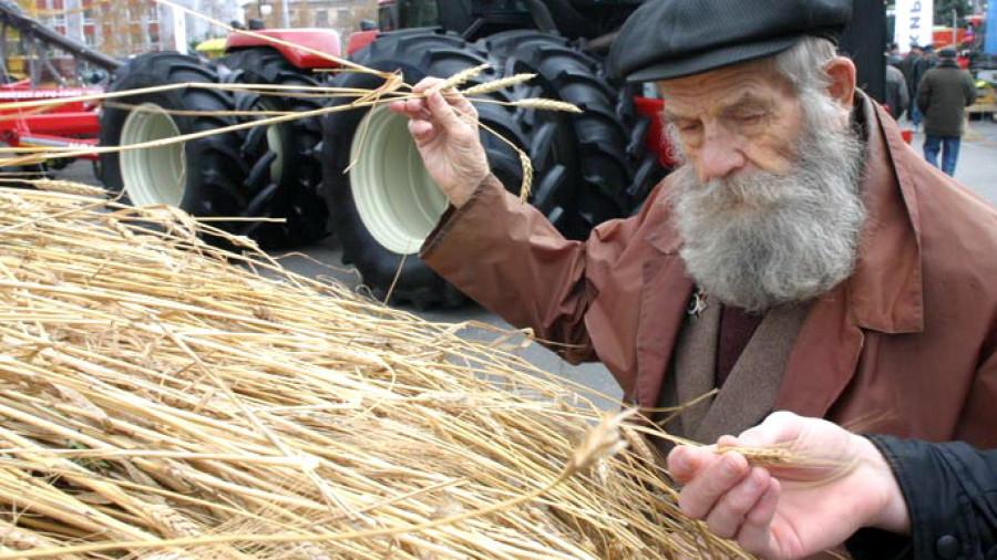 Зерно, пшеница.