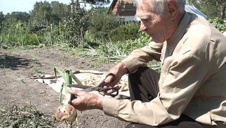 Орудие прогрессивного садовода – плоскорез, а не лопата.